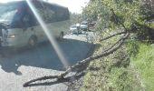 Drzewo spadało na autobus